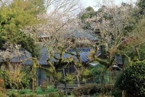 空き家の草木管理