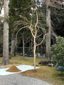 第43回 造園感謝祭 伊勢神宮奉納行事